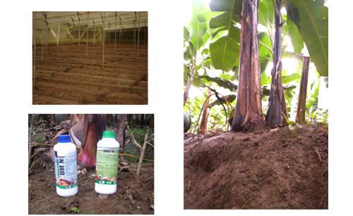 Humini - Fertilizante Organico